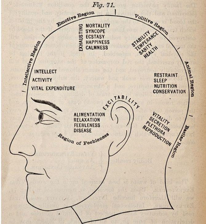 A phrenology chart (c.1881)